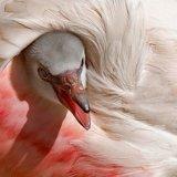 45.Flamingo.CPS