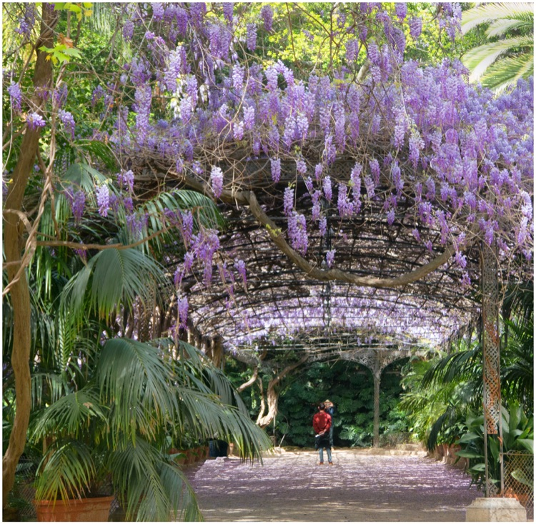 June 2018 Shoot Jardine Botanico 1st Monica Gaskill.jpg