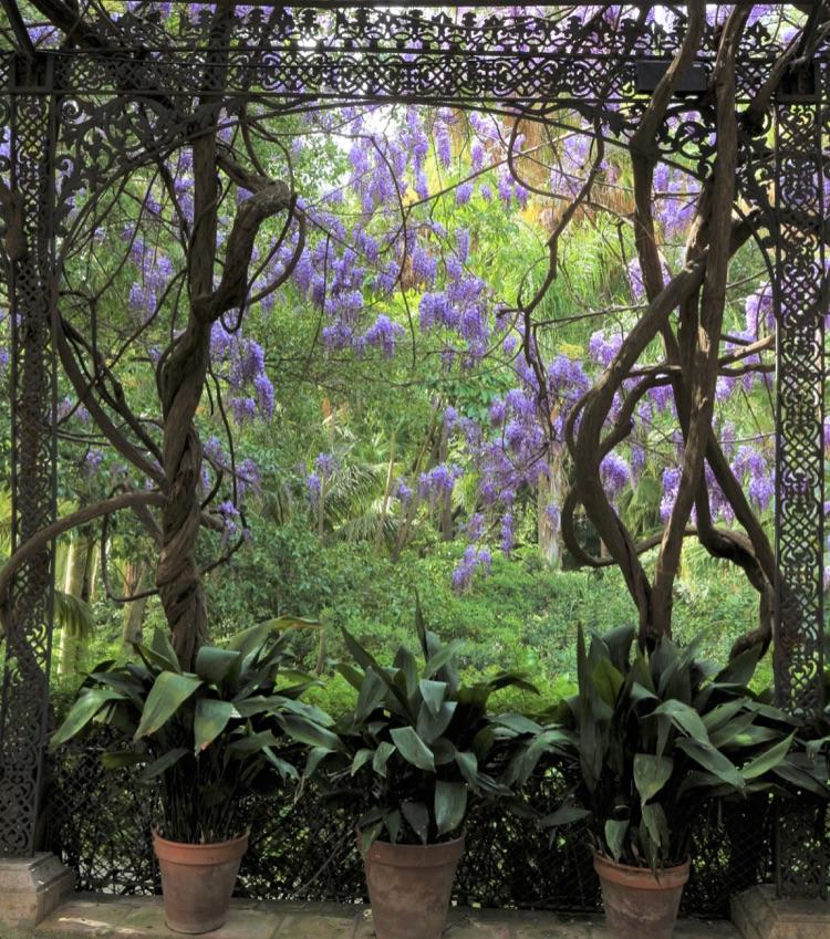 June 2018 Shoot Jardine Botanico 2nd Arja Pajunen.jpg