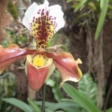 March 2018 Shoot Estepona Orchid House 2nd Daryl Buckman.jpg