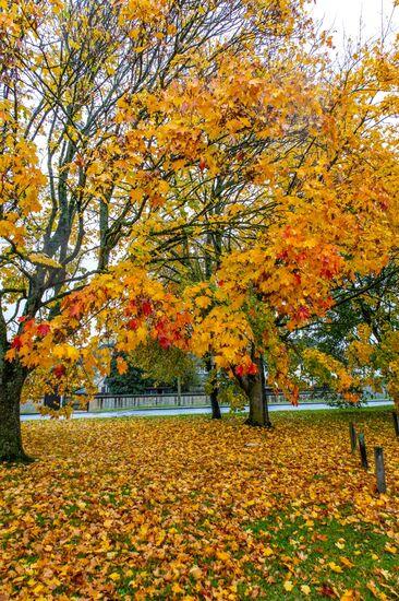 witney autumn (5 of 5)
