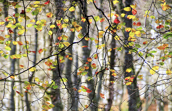 Autumnal Woodland 2