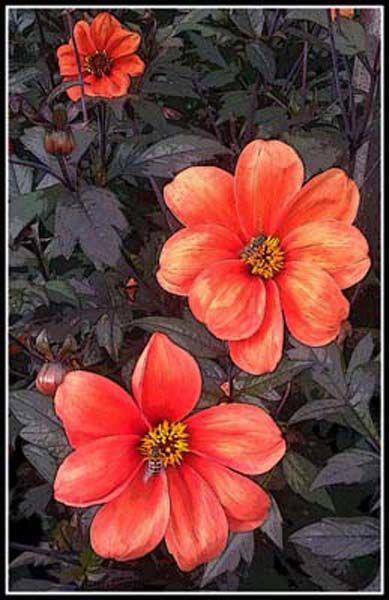 Flowerhead Impression