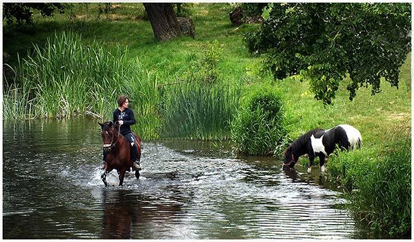 Horses to Water