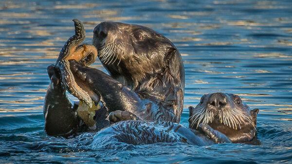 Sea otter family , Alaska