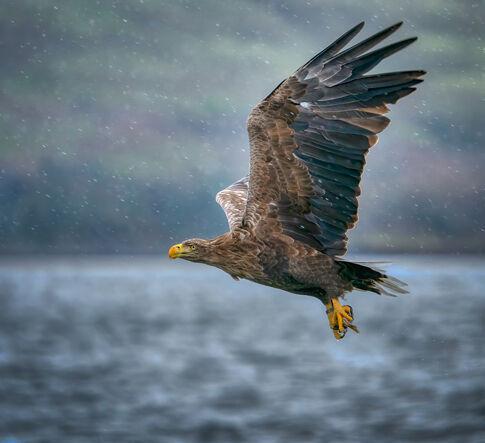 48 Sea Eagle In The Rain - 18 points