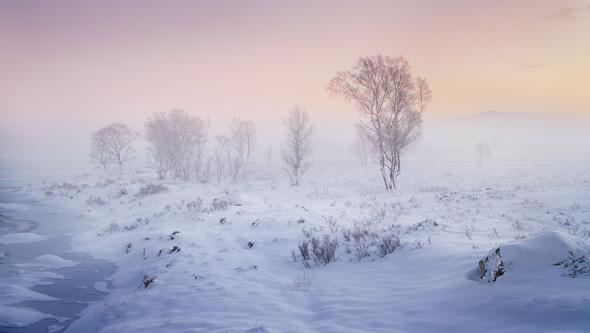 65 Winter birch - 15 points