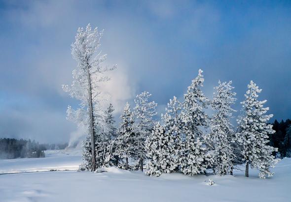 70 Frosty treescape