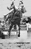 Queanbeyan Rodeo