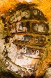 Fossil Weybourne Norfolk