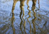 River Ant Norfolk