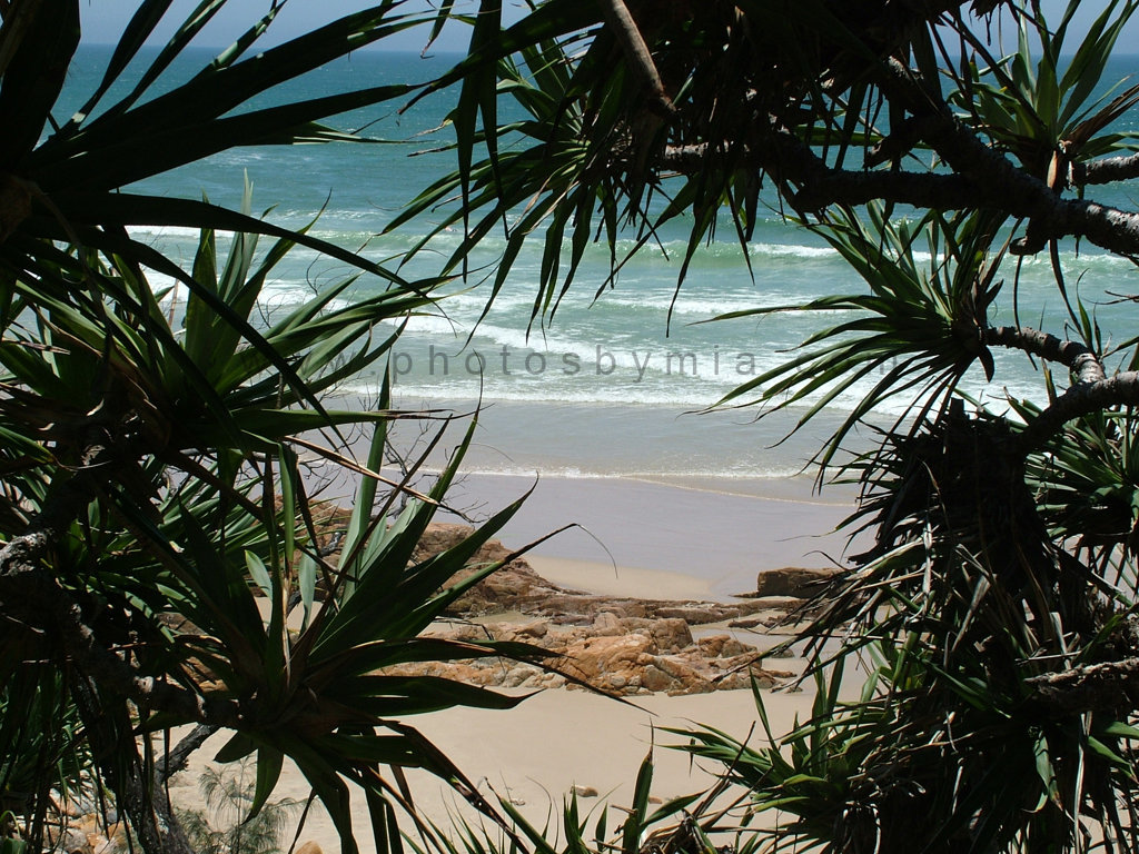 Through the Pandanus