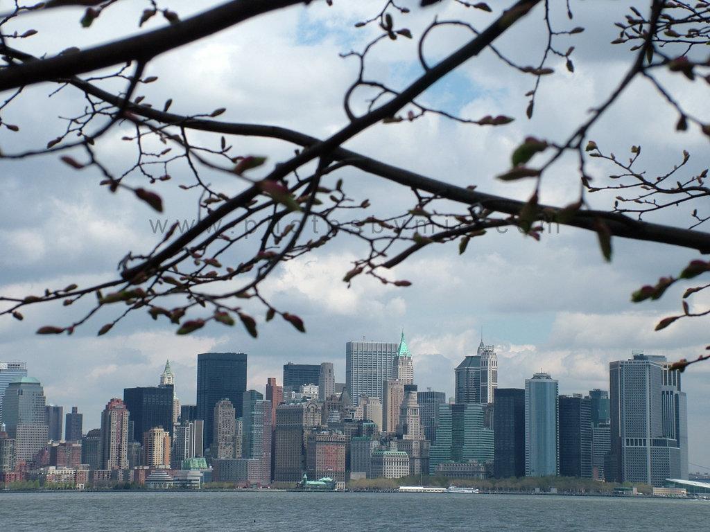 Through the NY Trees