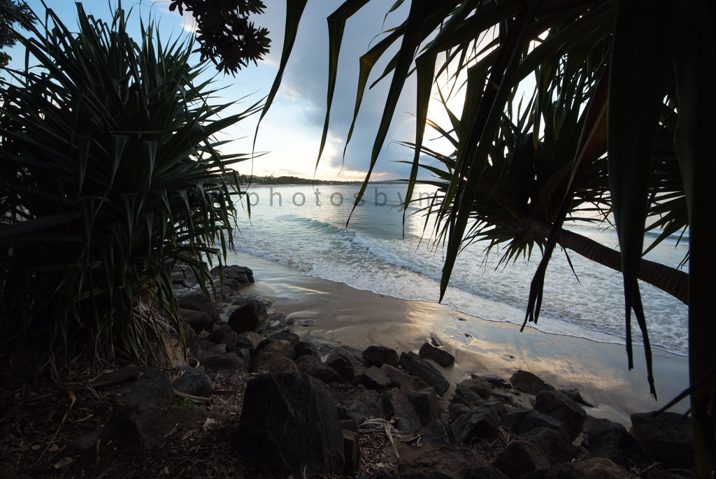 Main Beach Pandanus
