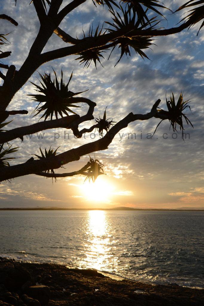 Pandanus Sunset