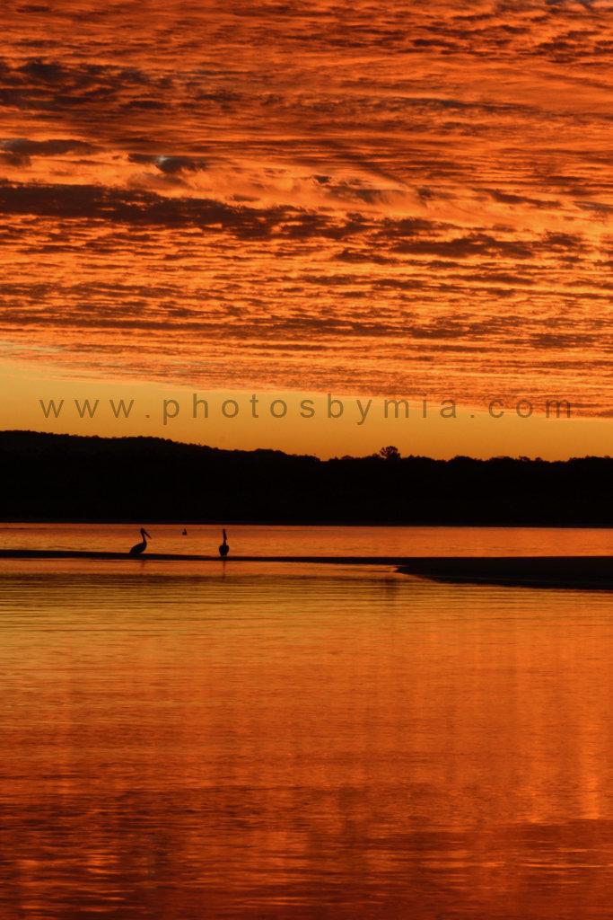 Orange Pelican Sunset