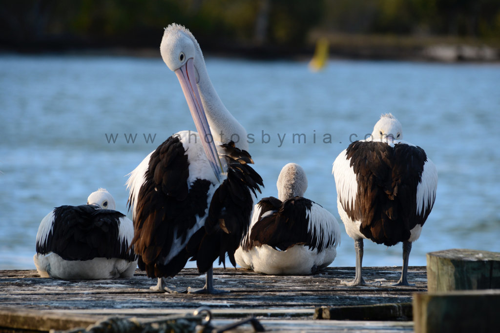Life on the Jetty