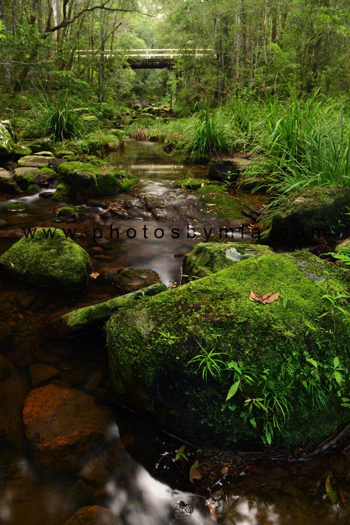 Rocky Creek Greenery