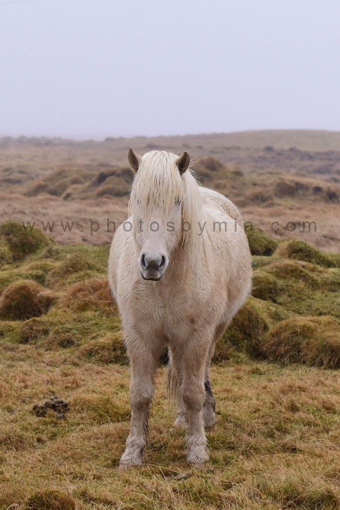 Wet White Horse