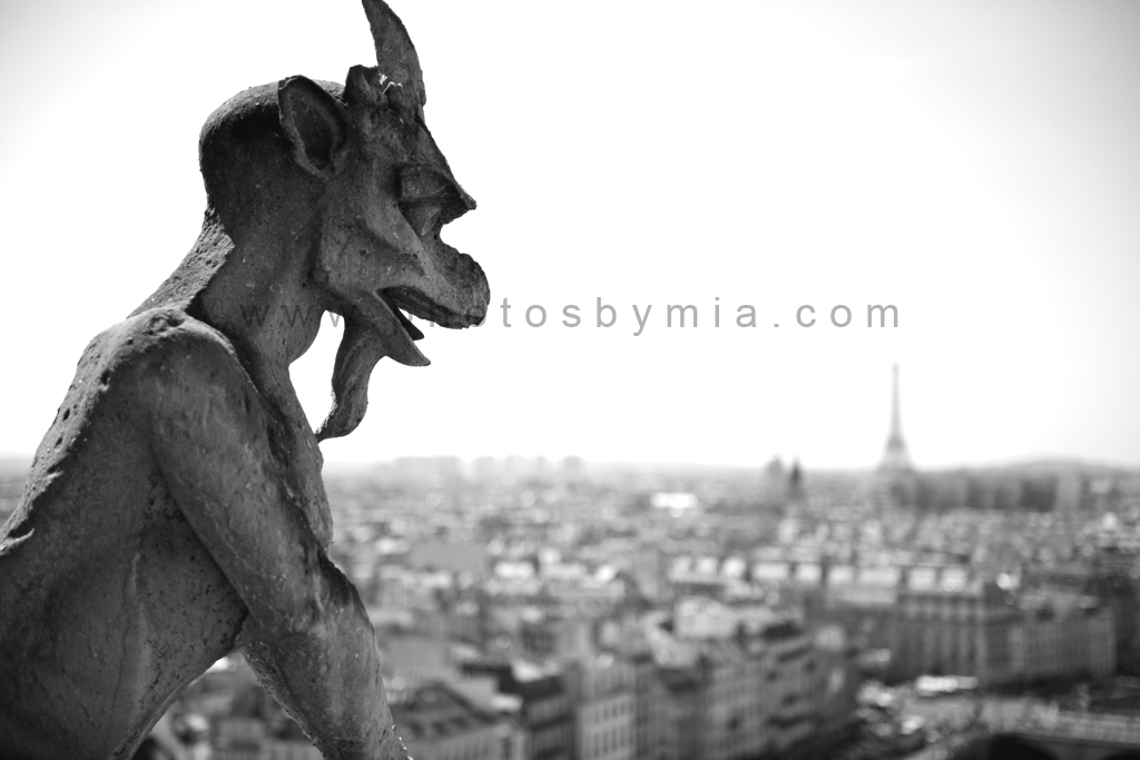 Gargoyle Watching