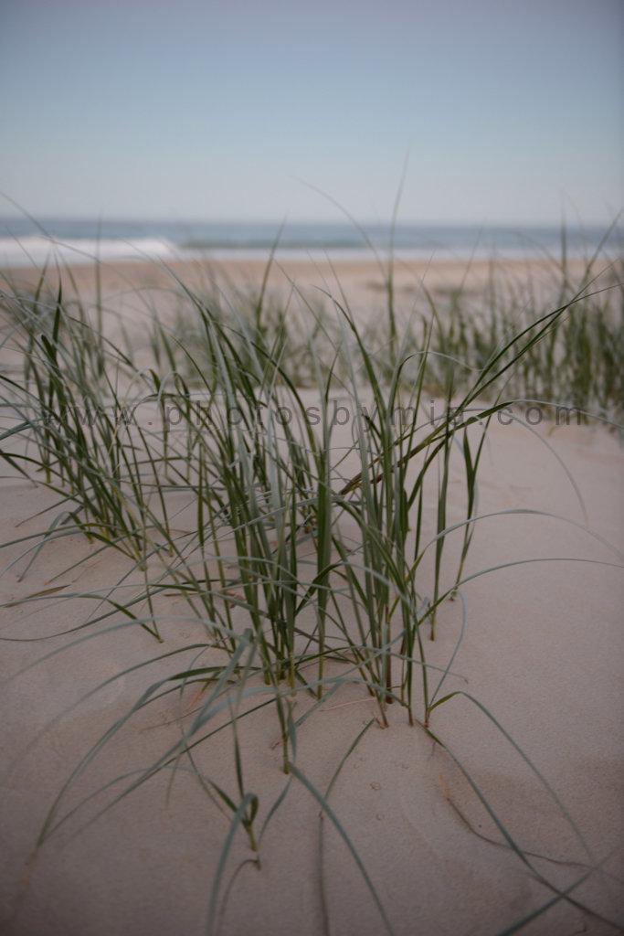 Dusky Dunes