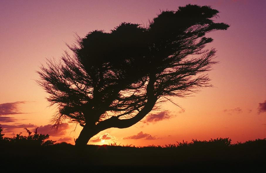 Windswept Tree, Five Mile Road