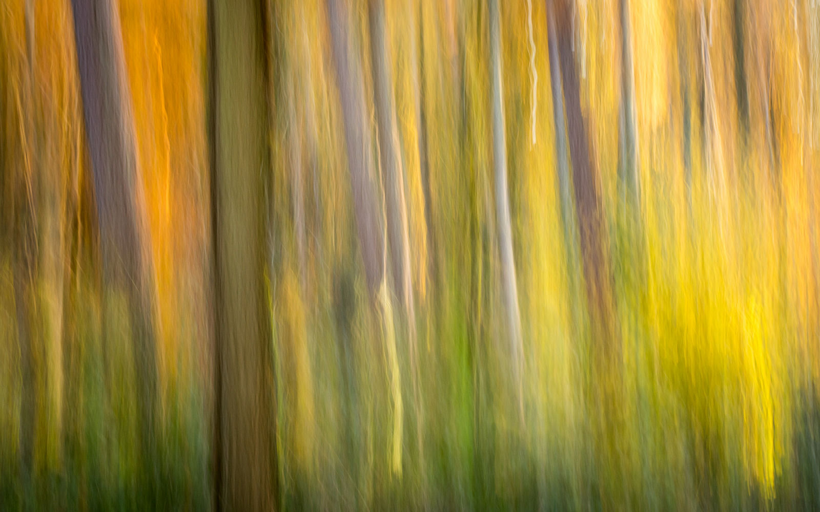 Autumn- DavidHewett-Highly Commended