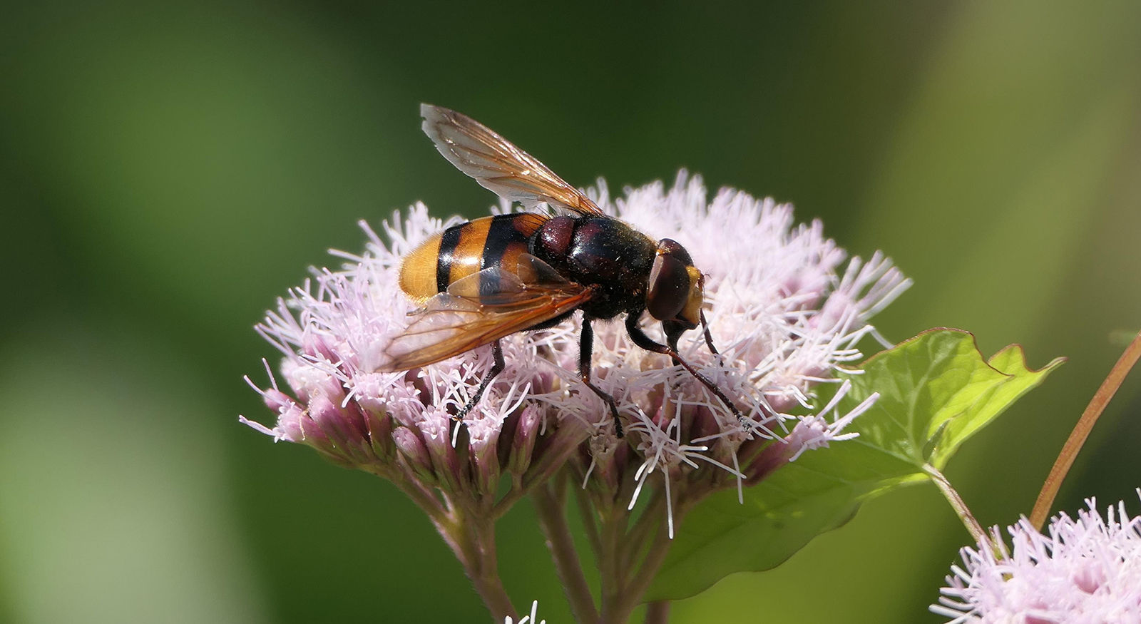DPI 2nd: Hover Fly