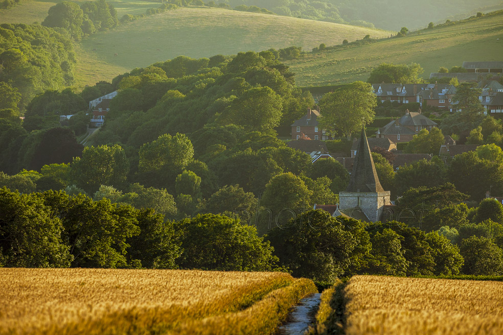 Summer evening on the South Downs