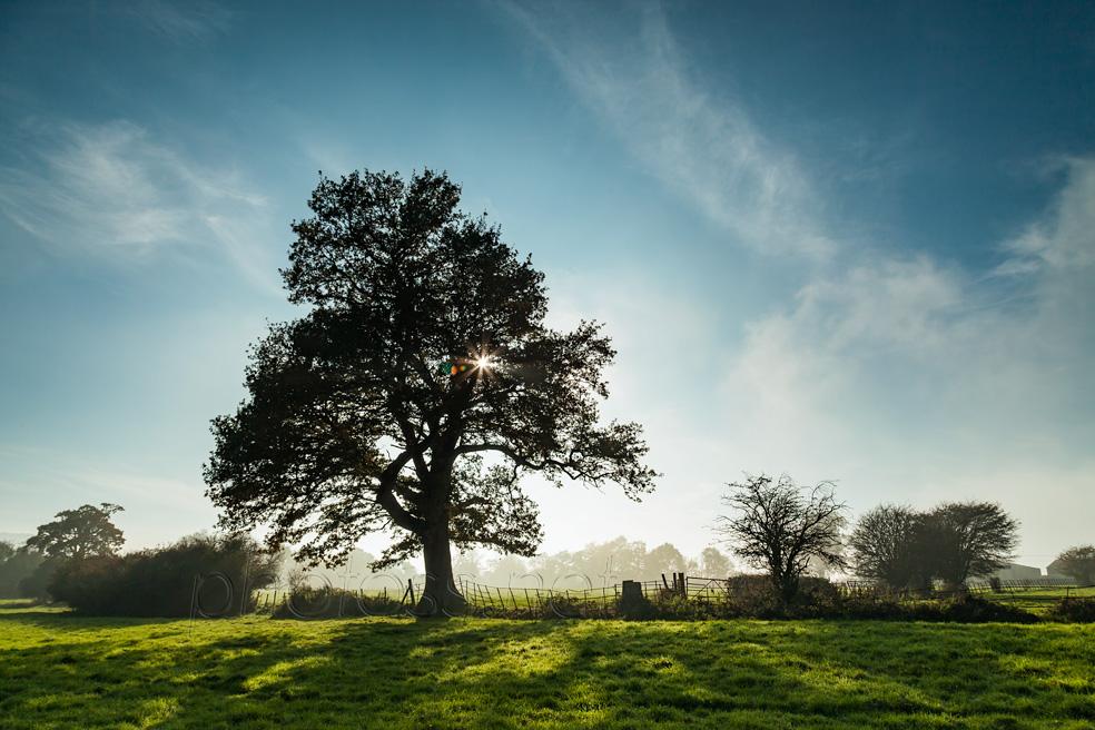 Rural Sussex