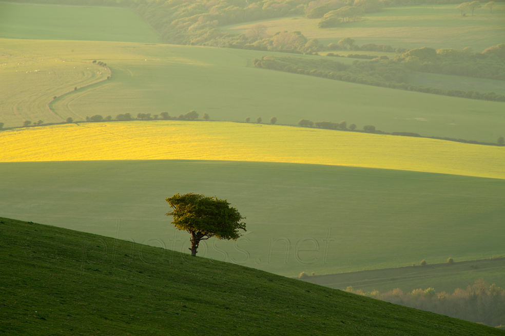 April afternoon on the South Downs near Lewes