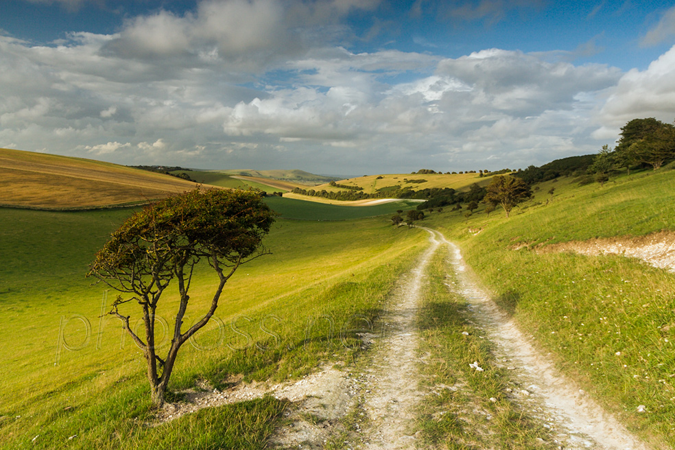A valley on the South Downs in East Sussex
