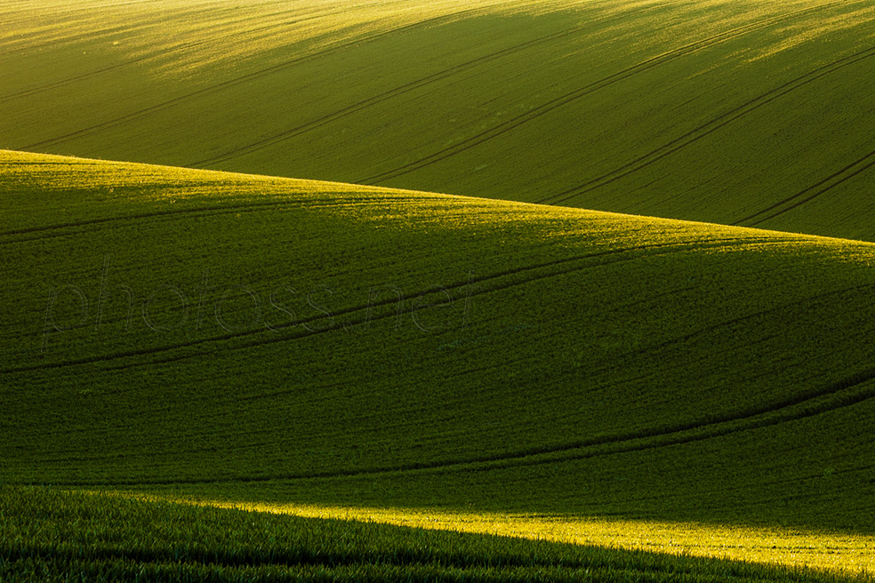 Spring evening on the South Downs in East Sussex