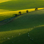 Spring morning on the South Downs in East Sussex