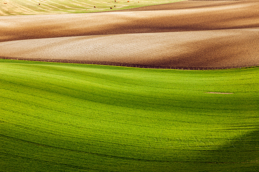 Painted Fields