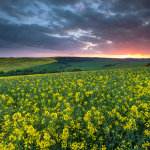 June sunset on the South Downs in East Sussex