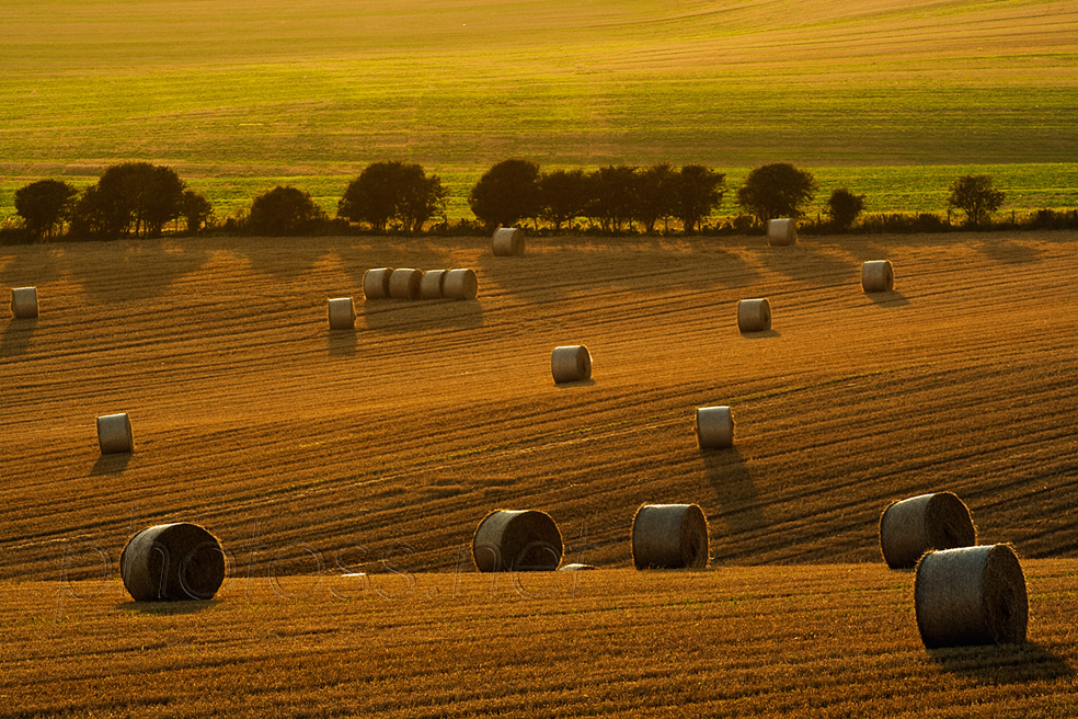 Summer evening on the South Downs in East Sussex