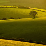 Winter afternoon on the South Downs in East Sussex