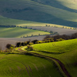 Early spring on the South Downs in East Sussex