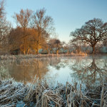 Frosty morning at a pond in West Sussex