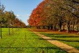 Ham Green Autumn