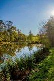 Ham Green Lake 2
