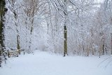 Snow, LeighWoods