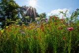 Thornbury In Bloom