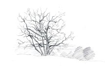 The Oak. Sketchbook 93 [59]
