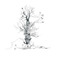 The ash tree. Sketchbook 93 [67]