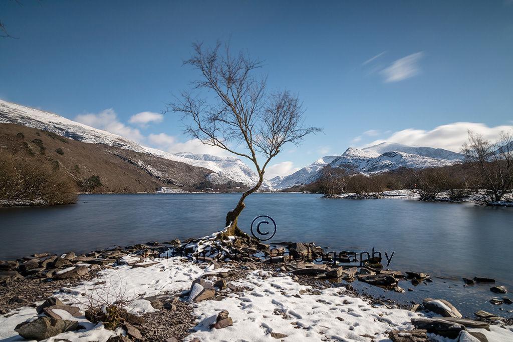 Lone Tree, Llyn Padarn, Llanberris