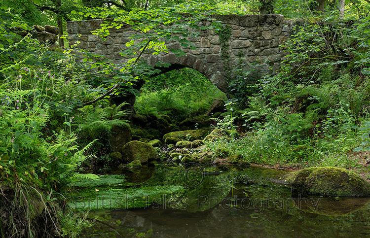 Green Oasis, River Bovey, Devon