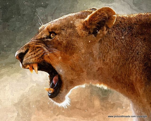 No 33. The Roar. lioness.