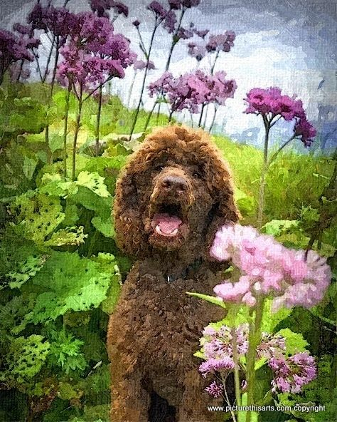No 65. Poodle amongst the tall flowers.